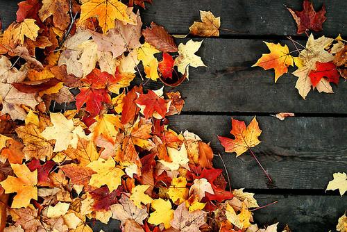 Eventos en otoño con Audiovisuales Alquitel